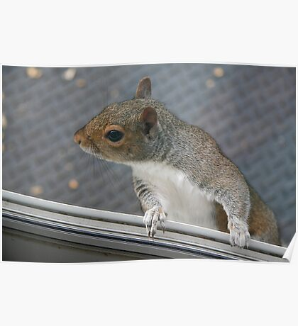 Really, I am not at all interested - - unless you have a peanut! Poster