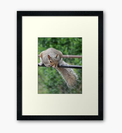 You think hanging up here is easy? Framed Print