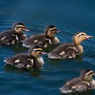 Ducklings by zzsuzsa