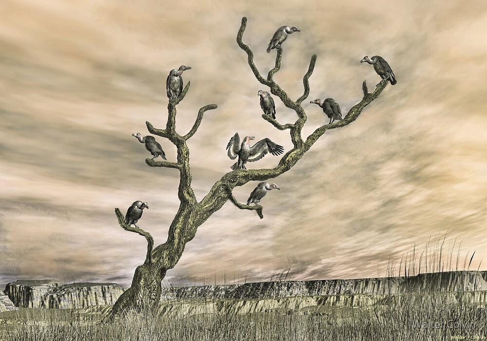 The Roost by Walter Colvin