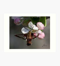 Winging It On The Apple Blossom Art Print