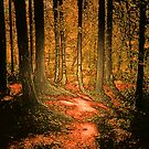 TAKE A WALK IN THE WOODS by leonie7