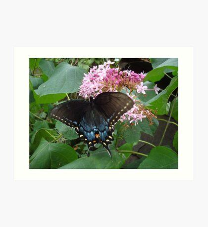 Black Eastern Swallowtail - Summer's End Art Print