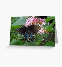 Black Eastern Swallowtail - Summer's End Greeting Card