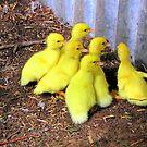 Six little ducks by keelinjay