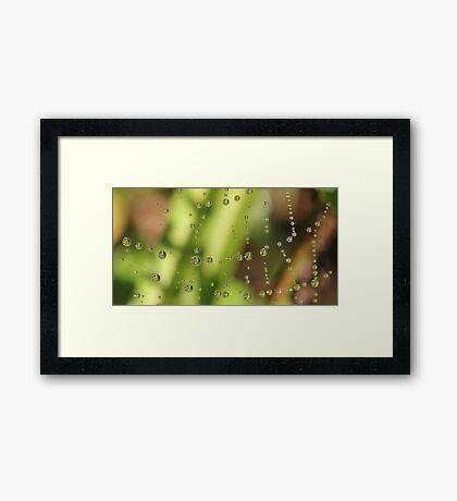 Charlottes Web Framed Print