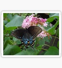 Black Eastern Swallowtail - Summer's End Sticker
