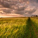 Tracks by james  thow