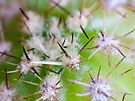 Super Macro of Cactus spines. by DPalmer