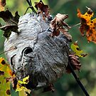 Wasp Nest by Randall Ingalls