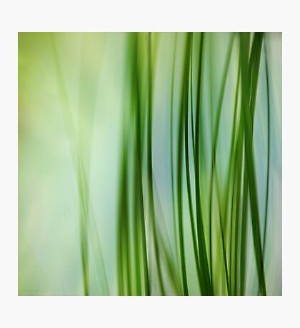 Vertical Grasses Photographic Print