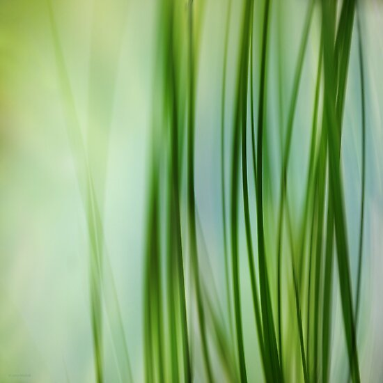 Vertical Grasses by Lena Weiss