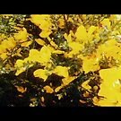 Yellow weeds by becca2425