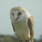 Barn Owl Taking It Easy by Eileen O'Rourke