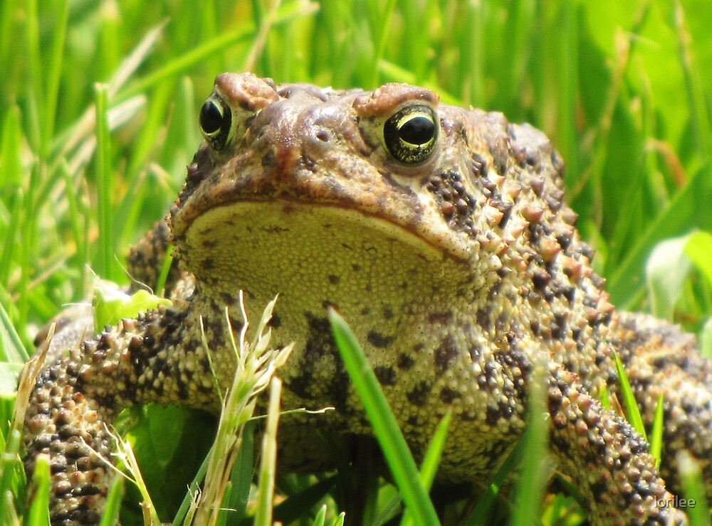 Mister Toad by lorilee