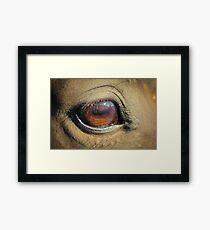 Horse Eye Closeup Framed Print