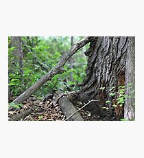 Branches At The Foot Of The Tree Photographic Print