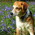 Benjie in the Bluebells by Eileen O'Rourke