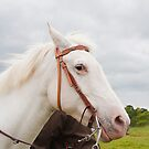 American White Rodeo Horse  by Elaine123