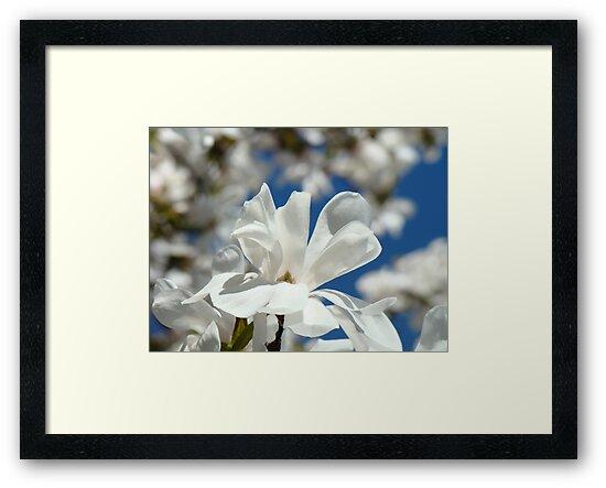 Flowering Magnolia Flowers art prints Baslee Troutman by BasleeArtPrints