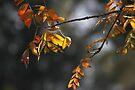 Autumn Light by yolanda