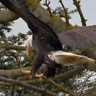 Land with an Eagle by David Friederich