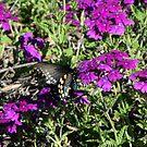 Butterfly Friend by Lorrie Davis