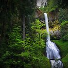 Pup Creek Falls by Tula Top