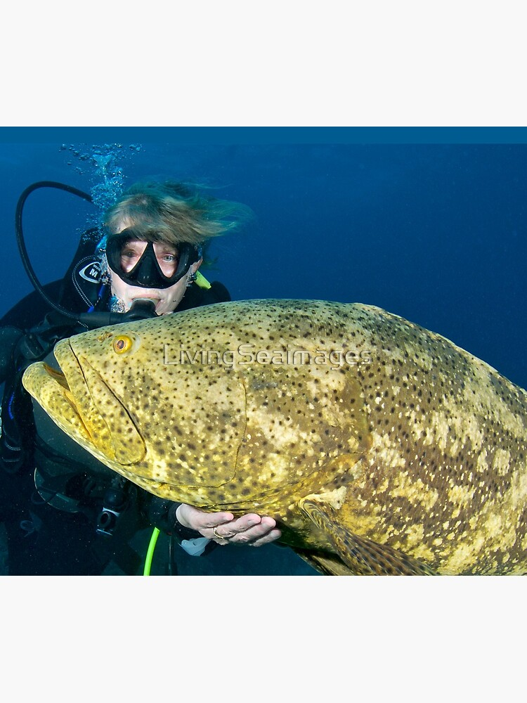Chris petting a Goliath Grouper by LivingSeaimages