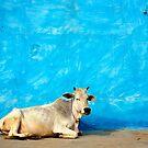 Holy Cow by David Reid