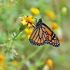 Butterfly hug - Monarch by Poete100