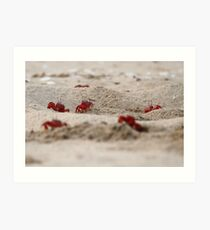 Red Crabs on the beach. Art Print