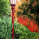 Street Lamp by socalgirl