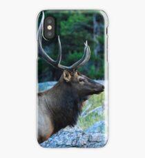 Bull Elk iPhone Case