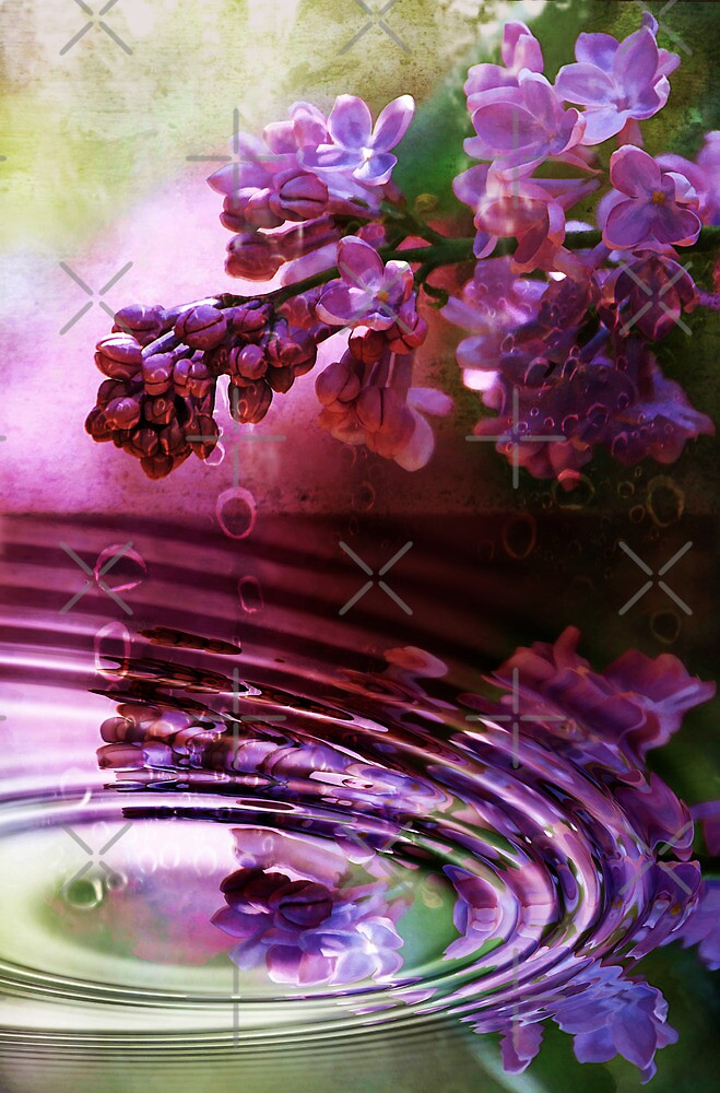 Moisture Drips From The Lilac    by CarolM