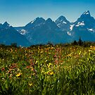Wild Flowers and Teton Mountains II by KellyHeaton