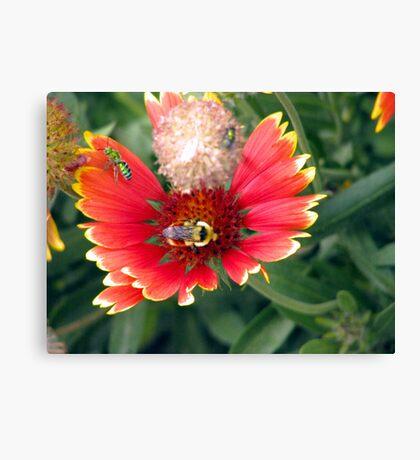 The bee's needs  Canvas Print
