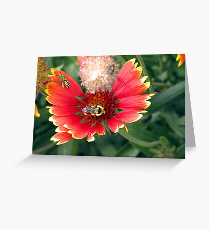 The bee's needs  Greeting Card