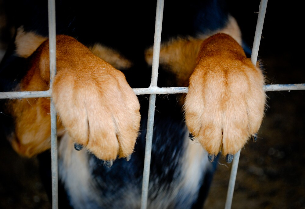 Paws by Angelina Zakor Photography