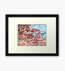 Dogwood Tree Flowering Pink Dogwood Flowers Baslee Framed Print