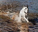 Z Splash  by Alex Preiss