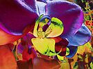 Orchid Art Collection by Marcia Rubin