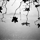 branches, kep, cambodia by tiro