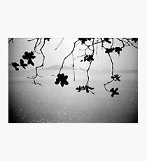 branches, kep, cambodia Photographic Print