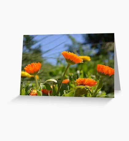 Cheerful Orange and Yellow Flowers Greeting Card