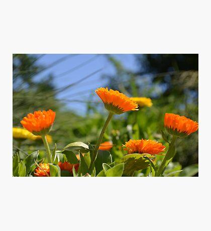 Cheerful Orange and Yellow Flowers Photographic Print