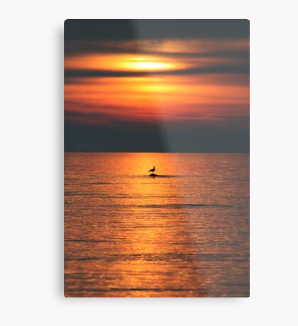 Bird in the Sunset Metal Print