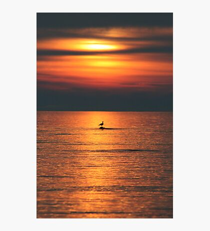 Bird in the Sunset Photographic Print