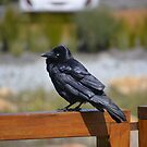 Close encounter with a crow! by adbetron
