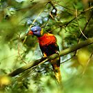 Abstract Lorikeet by naturalnomad